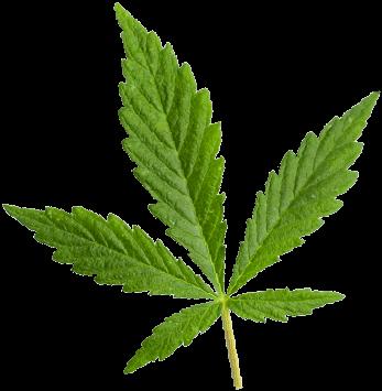 https://cannabooks.net/wp-content/uploads/2018/12/marijuana_leaf.png